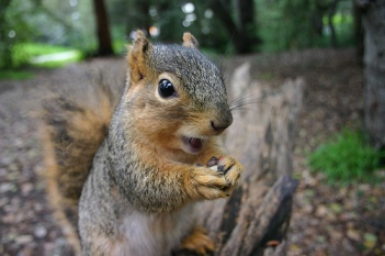 squirrel3.jpg